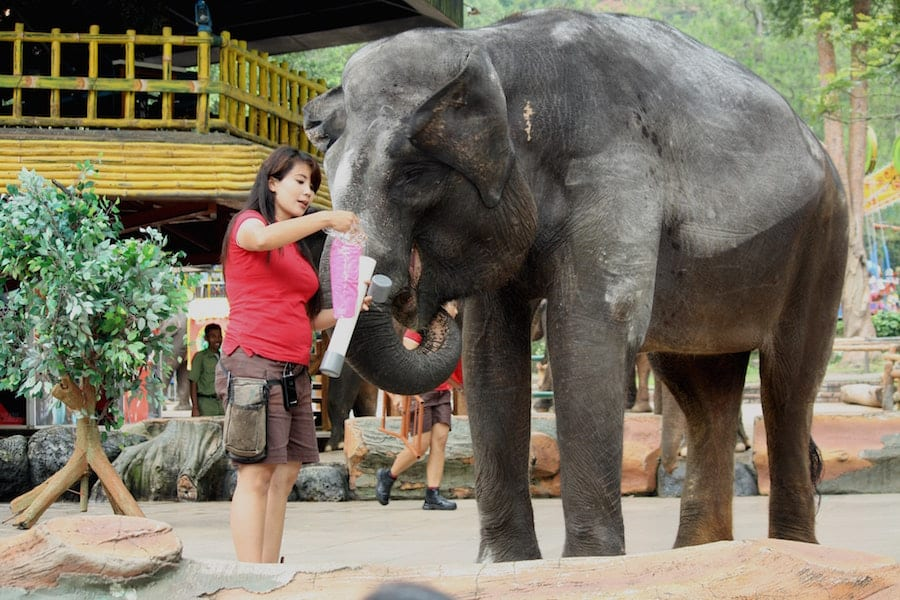 Woman taking care of an elephant in its exhibit.
