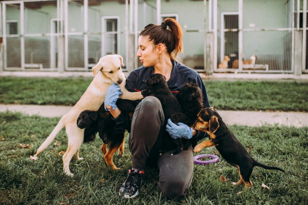 Woman volunteering at an animal shelter.