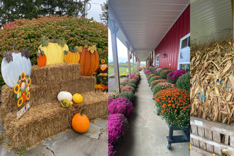 Collage of various chrysanthemums, hay bales, and corn shocks found at Hendren Farm Market and Oakland INSIDE & OUT Garden and Gifts