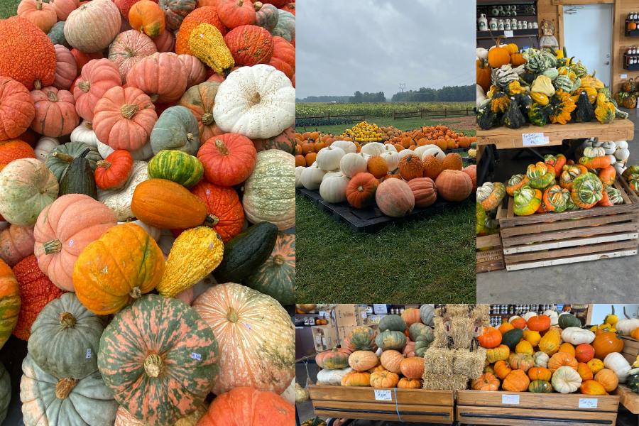 Collage of unique pumpkins and gourds sold at Hendren Farm Market.